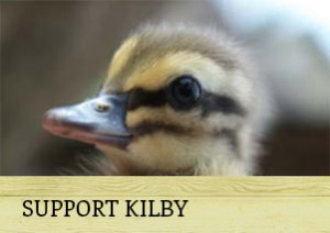h-kilby-support