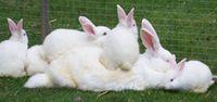 bunnies 01 13 2014