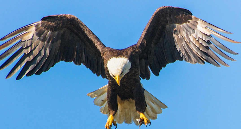 kilby season of eagles